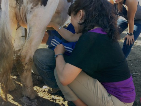 Begz taught each of us how to milk his cow. The trick is to be quick!