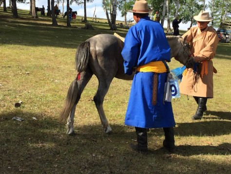 Right when the horse finished the race, the owner will slap the horse's butt and also comb the hair to get rid of the sweat.