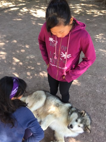 Joani and Olivia loved to play wth Subaka,the husky dog, whenever there was break.