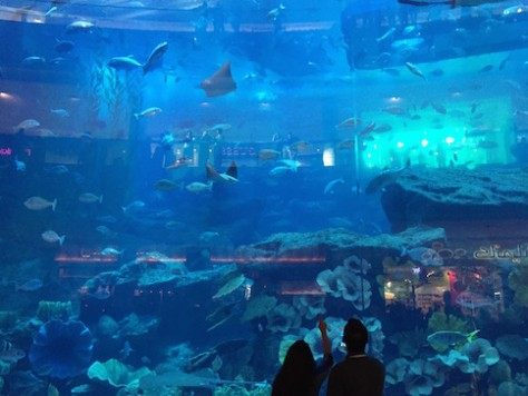 The 3 stories high aquarium in the world's largest mall, Dubai Mall, attracted everyone's attention.