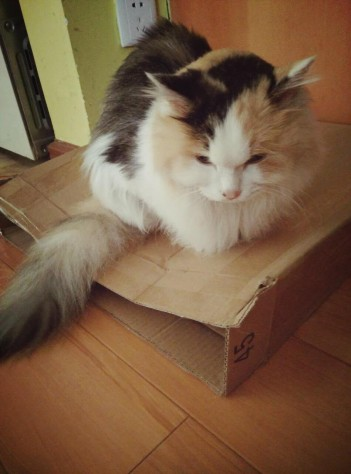 Zoe like to sit on her favorite scratching box.