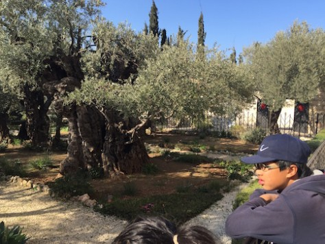 At the garden of Gethsemane, we can almost see Jesus kneeling there as He prayed among the thousands year old Olive trees.