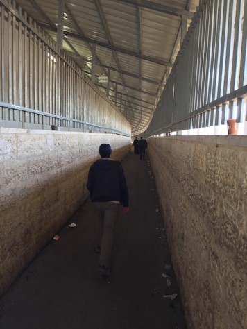 It was mind boggling to have to get out of the wall in to the Israeli side to go to the Tomb of Rachel which is effectively in the West Bank side.